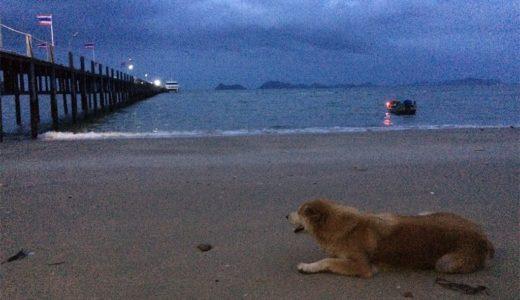 【The 56th day】タオ島でダイビングライセンスをとろう!