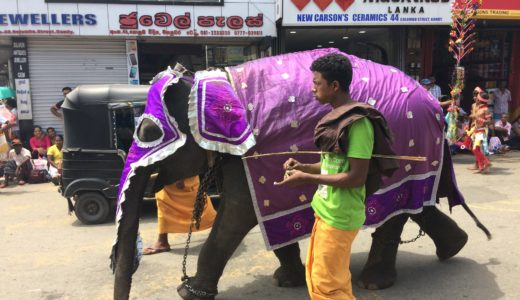 【世界一周】スリランカ旅行で訪れたおすすめの観光地