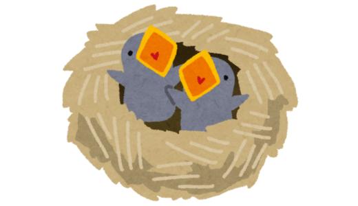 鳥の巣との闘い